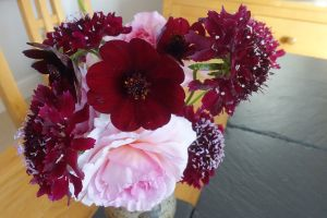 chocolate-cosmos-scabious-rose